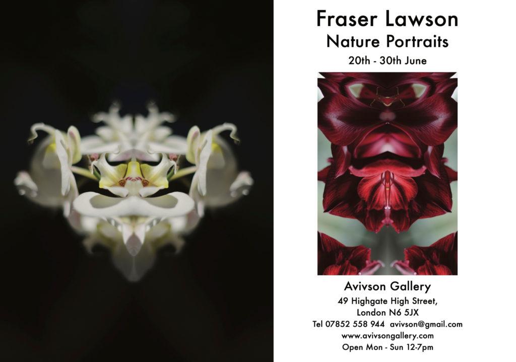 Fraser Lawson - Avivson Gallery