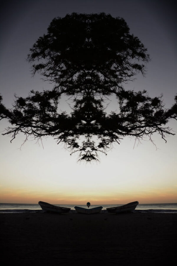 Fraser Lawson - Tree # 13
